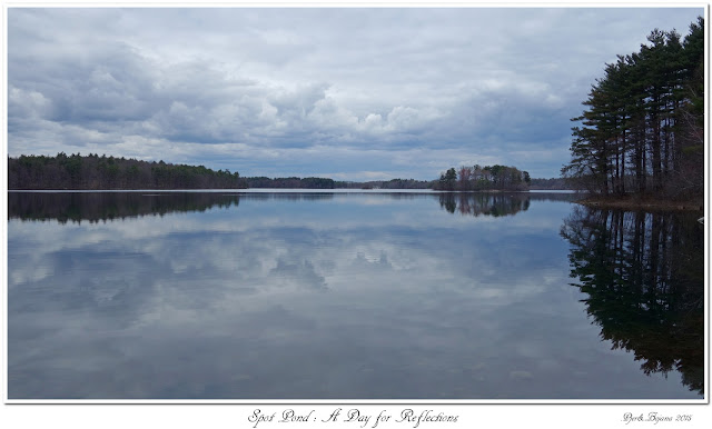 Spot Pond: A Day for Reflections