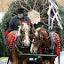 O Kerry και ο Jemprey με το χριστουγεννιάτικο δένδρο...
