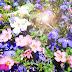 Paarse en roze bloemen op een zomerse dag
