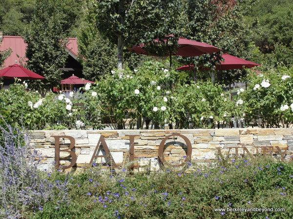 Balo Vineyards in Philo, California