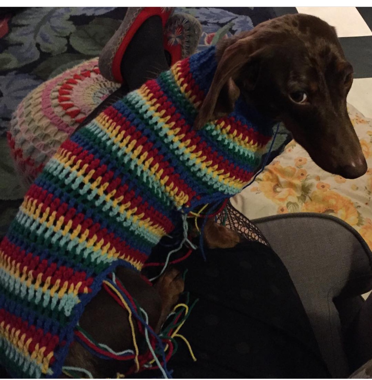 Made By Mim Uk My Sausage Dog Jumper Pattern For Caboodle Magazine