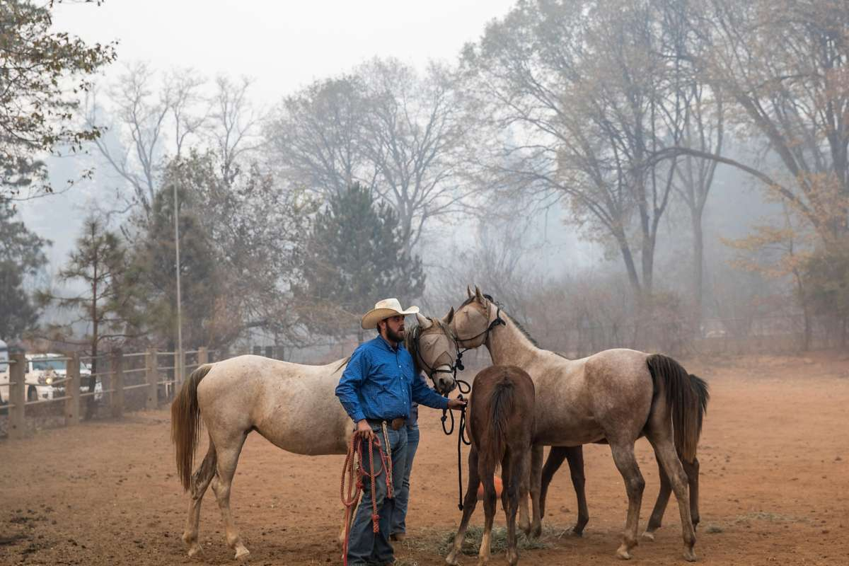 The Westerner Cowboy Volunteers Ride To The Rescue Of