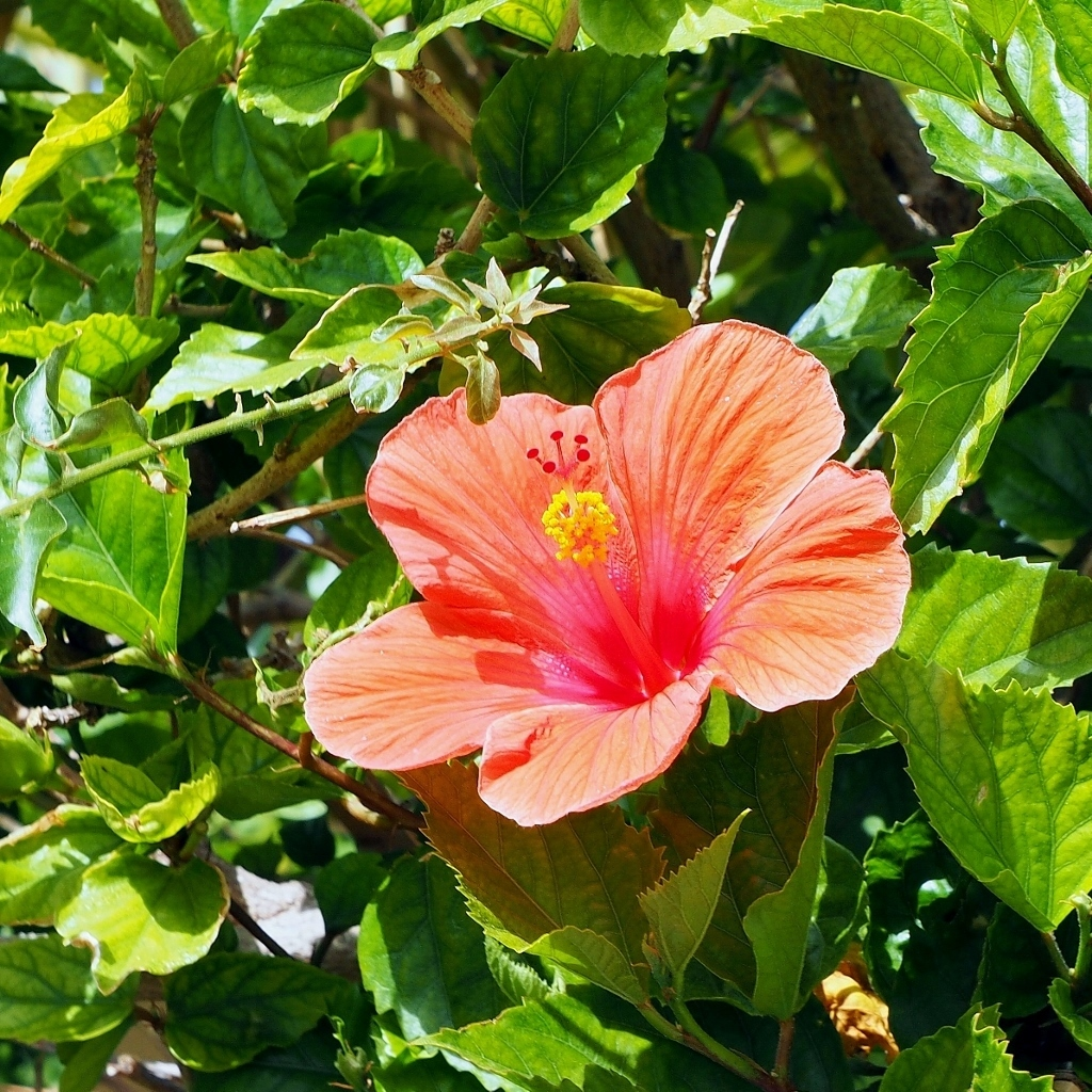 An amateurs ventures on life subtropical bloom note that the colourful parts are in fact bracts acting as attractors of pollinators as the actual flowers are so tiny izmirmasajfo Choice Image