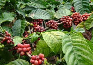 Sumber Daya Alam di Sulawesi Barat