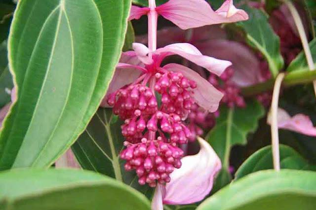 flowers, Hydrangea, gardens, Okinawa