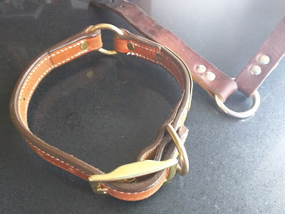 safety dog collars