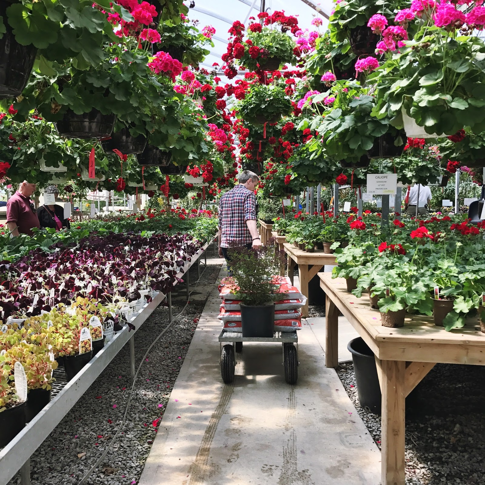 prince edward county attractions, flower stand, belleville attractions, trenton