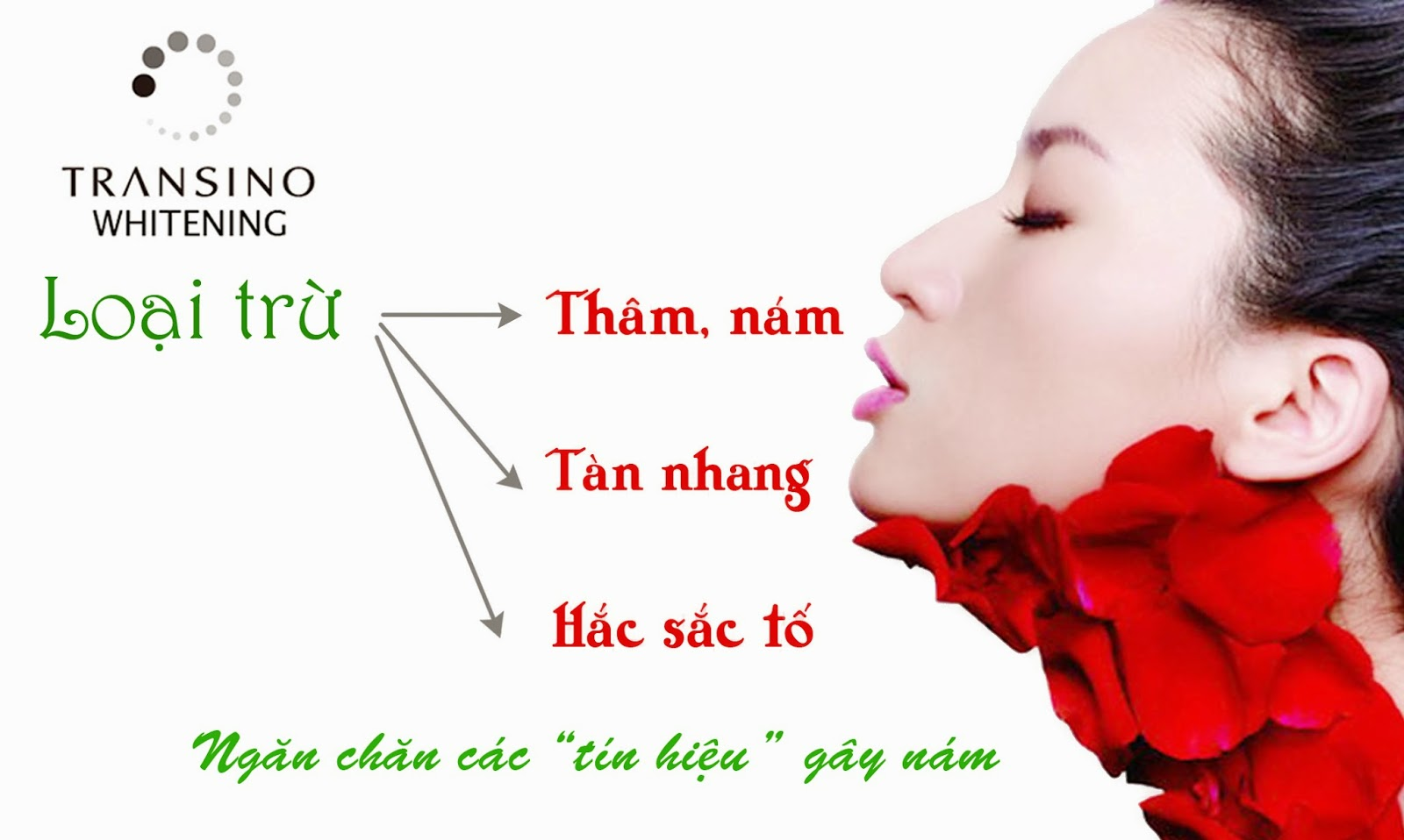 Lợi ích của vien uong tri nam transino whitening