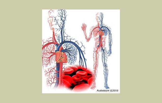 Pengertian Pembuluh Darah, Fungsi Pembuluh Darah, Struktur Pembuluh Darah, Jenis Pembuluh Darah