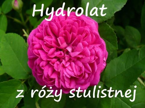 Hydrolat z róży stulistnej - przyjemny nawilżacz dla suchych i wrażliwych cer :)