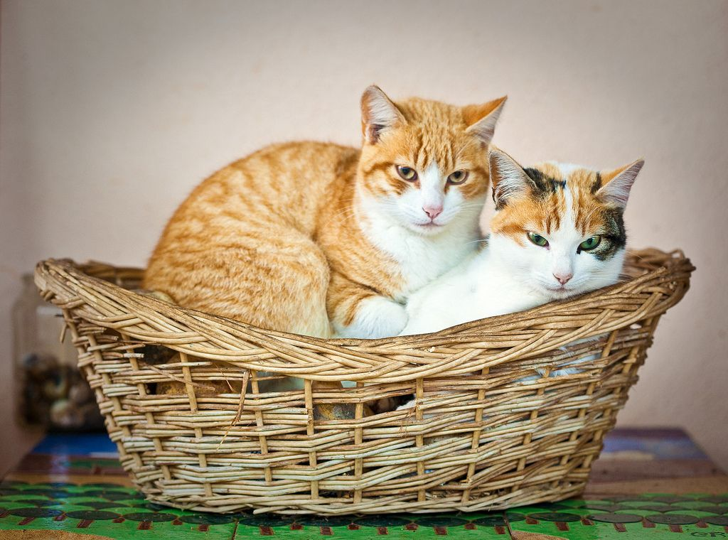 2. Cats in Basket by Juan Antonio Capó