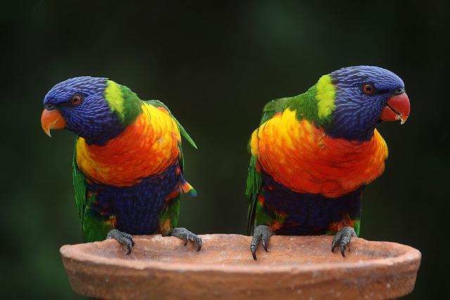 How Long Do Parrots Live - How Long Can Parrots Live - Parrots Lifespan
