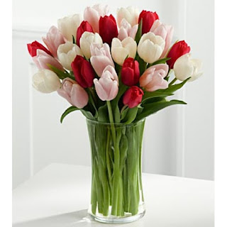 tulip warna warni lamongan tin33