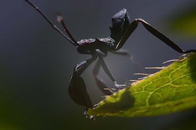 foto serangga Persamaan Belajar Blog dengan Belajar Fotografi - part #2