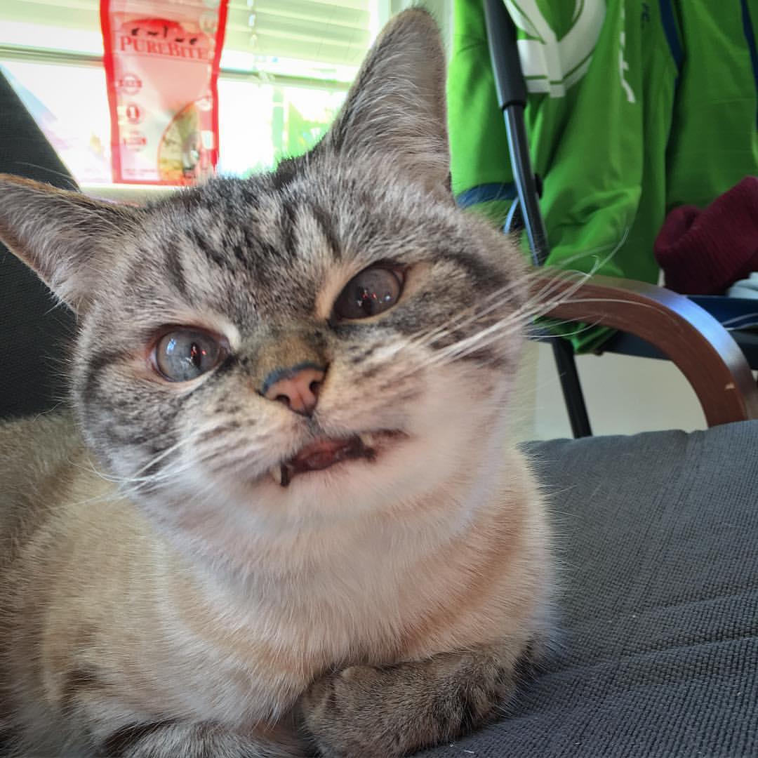 Funny Cats: Funny Cats - Part 181 (40 Pics + 10 Gifs