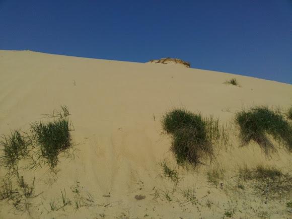 Херсонская область. Песчаный массив «Олешковские пески»