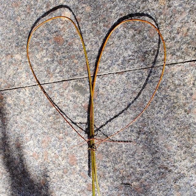 In Herzform gelegte Weidntriebe