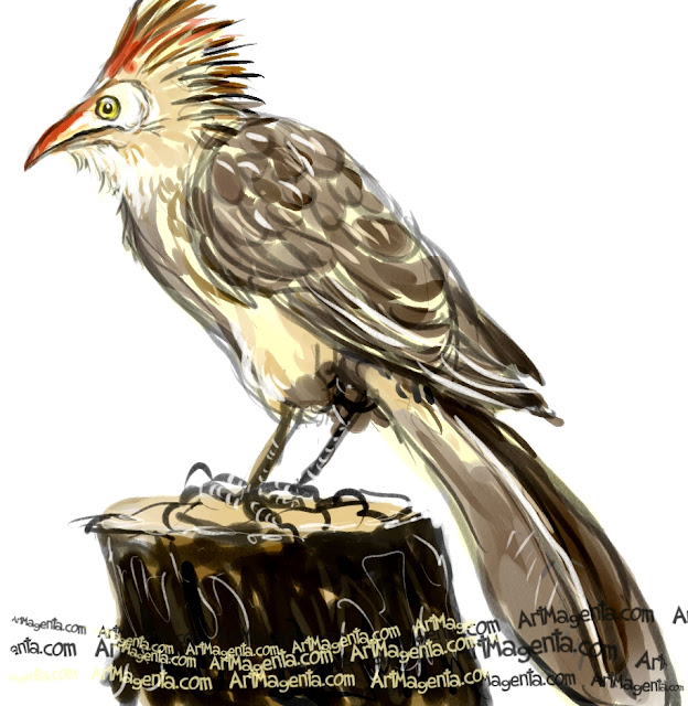 Guira Cuckoo sketch painting. Bird art drawing by illustrator Artmagenta.