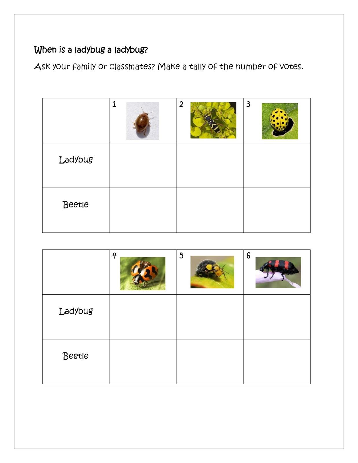 The Best of Teacher Entrepreneurs III Be a Ladybug Detective – Ladybug Life Cycle Worksheet