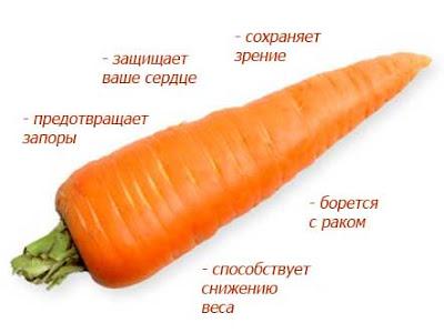 корень моркови