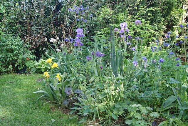 Beet im Mai mit Iris Akelei und Allium