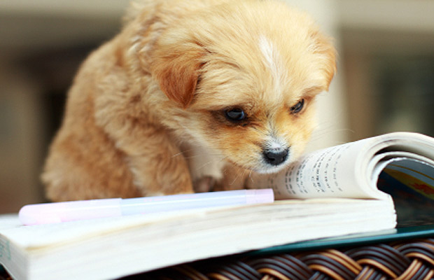 Reading Puppy Royalty Free Stock Photos - Image: 11936208 |Puppy Reading