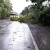 Chuva forte acompanhada de ventos derruba árvores entre Seberi e Boa Vista das Missões