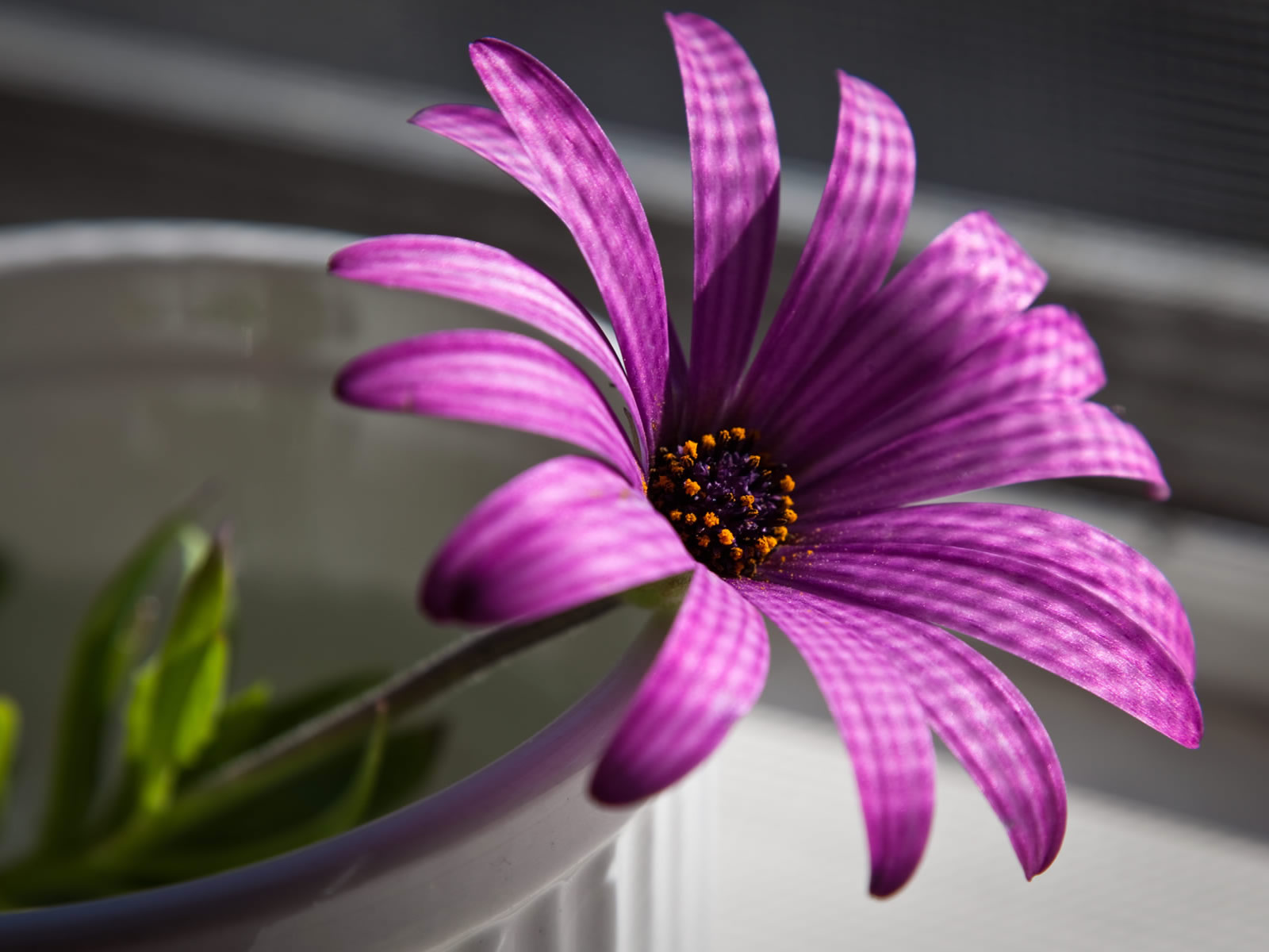 flowers for flower lovers.: Desk top HD Beautiful flowers wallpapers.