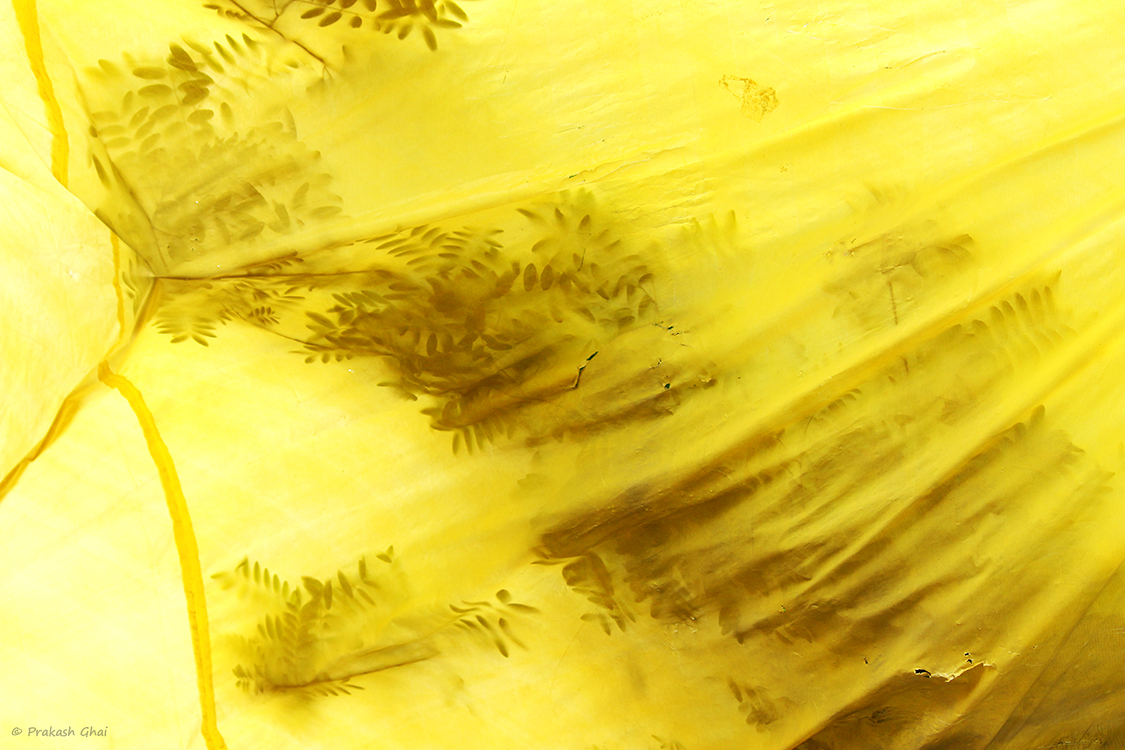 A Minimalist Photo of the Tree leaves partially visible through a yellow cloth appearing to be playing Hide and Seek Game.