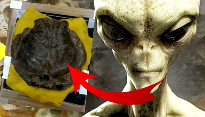 Ερευνητής UFO ισχυρίζεται ότι έχει ένα πραγματικό εξωγήινο κρανίο και το παρουσιάζει στο κοινό στην Κίνα