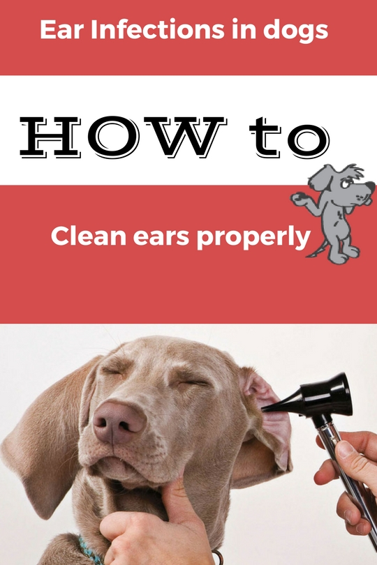 Holistic Ear Cleaning Dogs