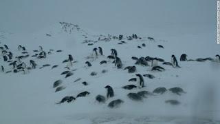 http://www.cnn.com/2015/02/25/world/penguin-watch-conservation-citizen-science/
