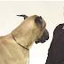 ΚΑΤΑΠΛΗΚΤΙΚΟ! Πώς αντιδρούν οι σκύλοι σε γάβγισμα ανθρώπου;