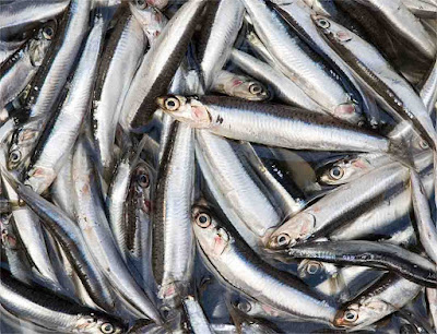 anchovies-fish-with-omega-3-fatty-acids-list-picture