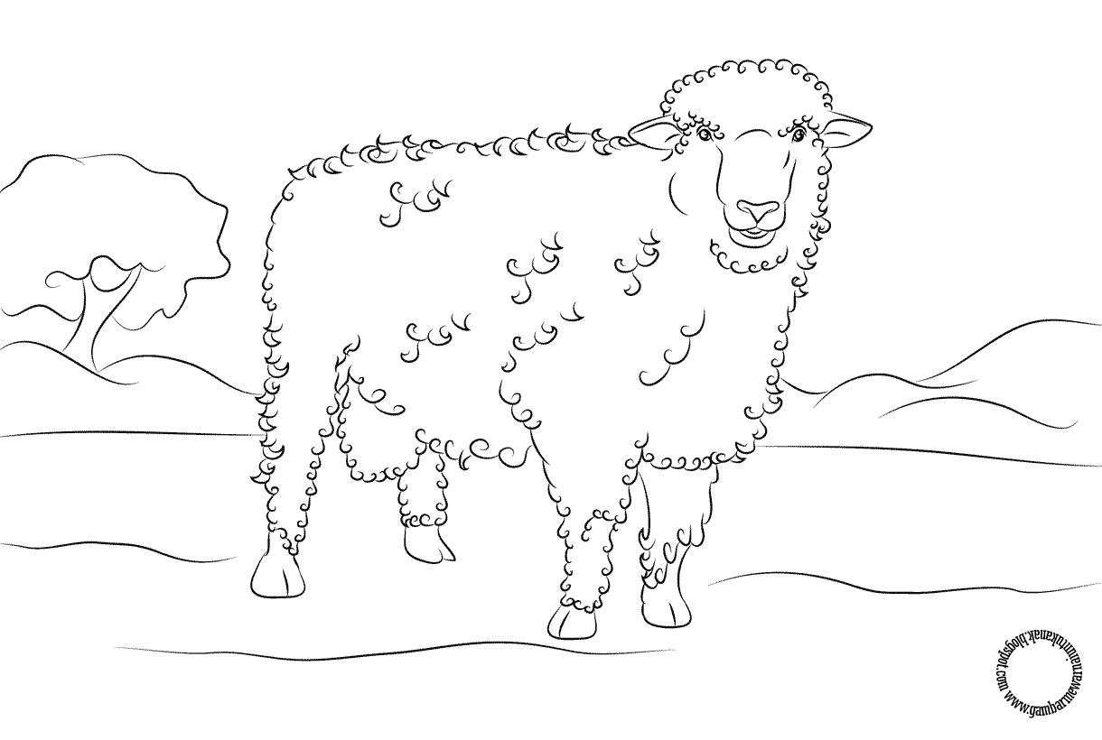 Gambar Mewarnai Domba Untuk Anak