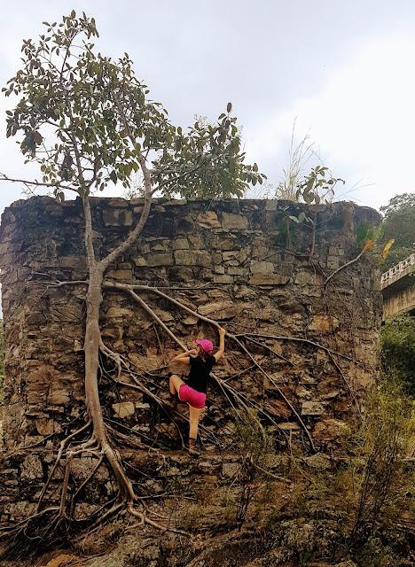 """""""Escalando"""" parte da ponte no Rio das Almas que foi tomada por uma árvore."""