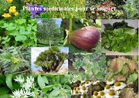 Plantes médicinales pour se soigner