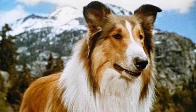 ... da Lassie