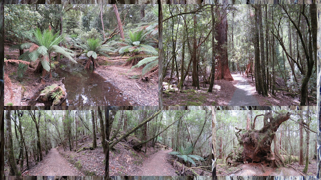 Day Trip to Mount Field National Park Near Hobart Tasmania - Primordial Forests