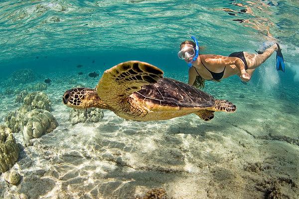 snorkel en Isla Culebra