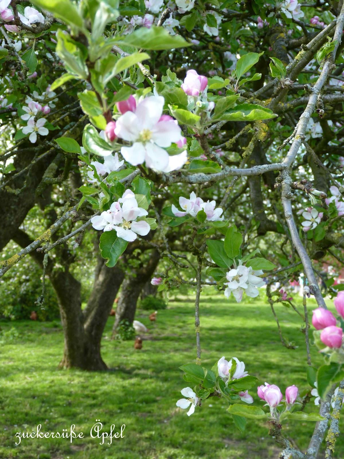 Apfelbluten Und Eine Gewinnerin Zuckersusse Apfel Kreativer