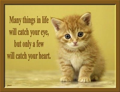 cat quotes may things in life will catch you eyes,