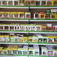 tanaman hibrida,budidaya tanaman,benih tanaman,bibit tanaman,pertanian,petani,lmga agro