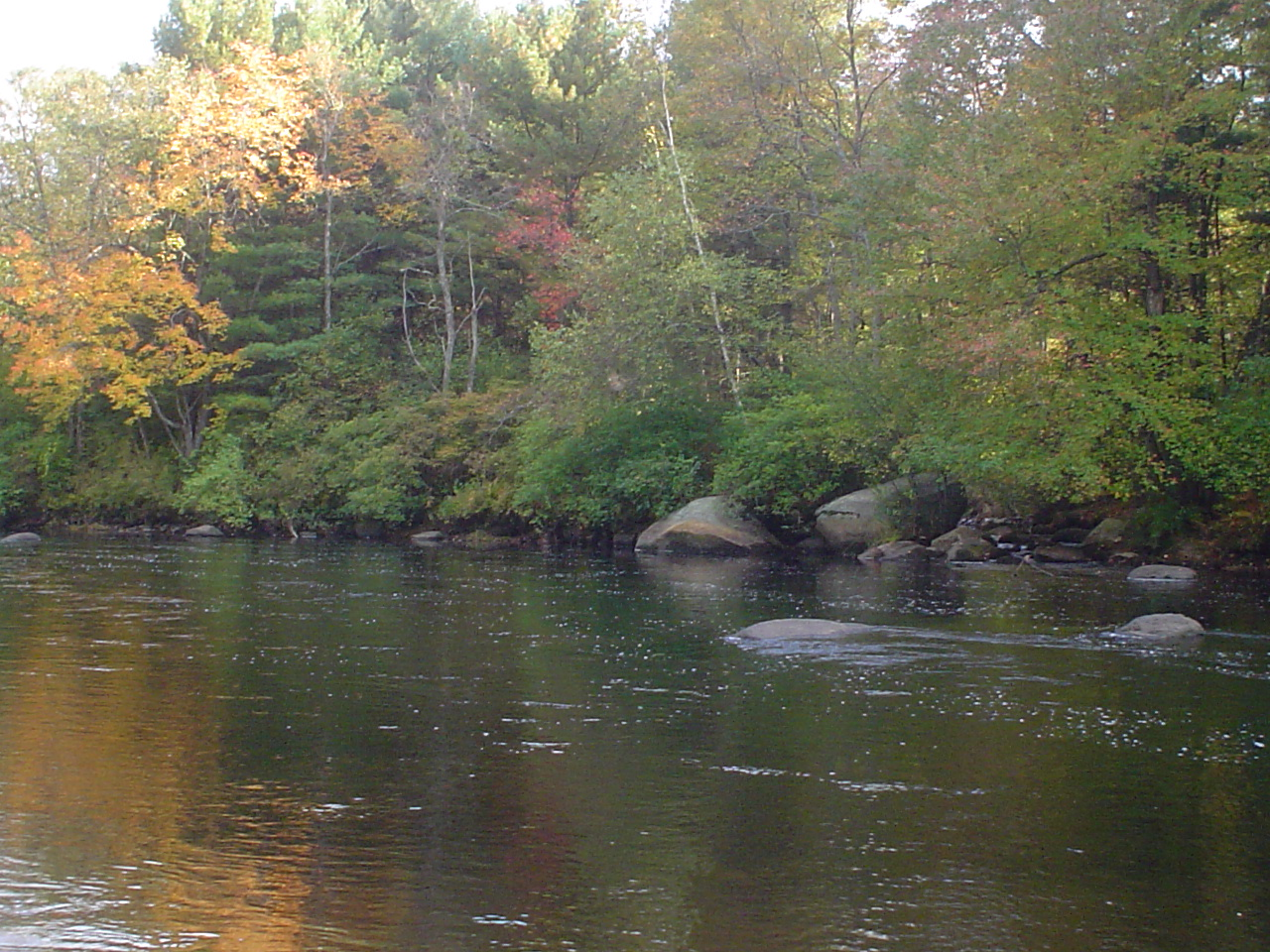 Millers swift ware and eb fly fishing forum welcome to for Wa fly fishing forum