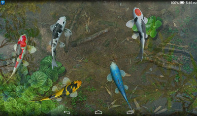 Transform Your Android Homescreen Into A Realistic Koi Fish Water Pond And Interact With The Beautiful Creatures In Garden Live Wallpaper Full
