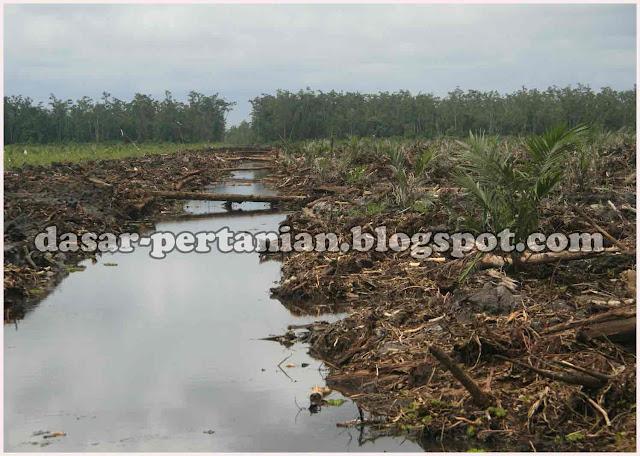 Cara Tepat Pengolahan Tanah Gambut Menjadi Lahan Pertanian