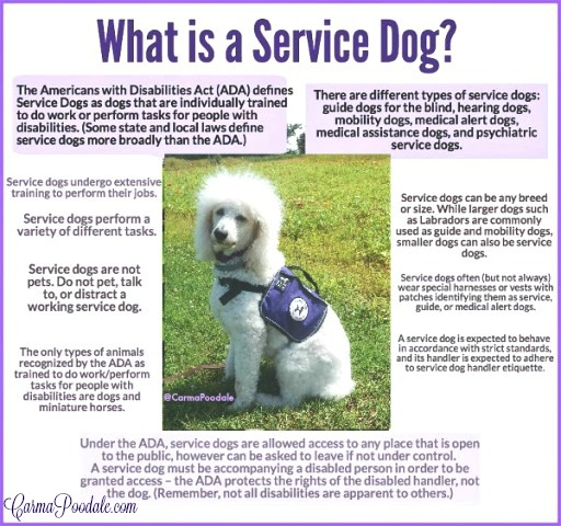 Infographic for What is a Service dog-carmapoodale