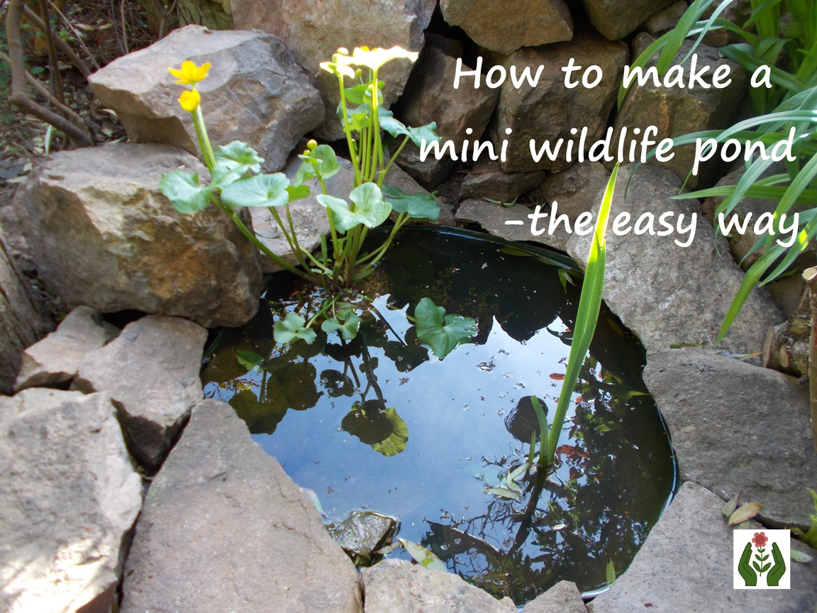 The Green Fingered Blog How To Make A Mini Wildlife Pond