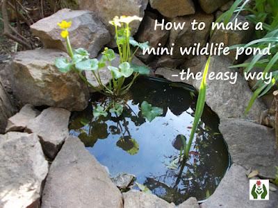 Make a mini wildlife pond Green Fingered Blog