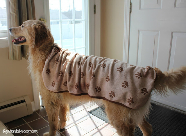 keeping dogs dry with luv and emma's dry pets plus microfiber towel